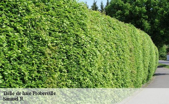 Taille de haie  froberville-76400 Renold Elagage